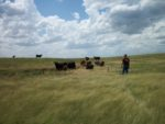 Applestead Acres: home of grass fed, grass finished beef.