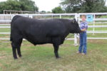 Beef steer for sale during summer- This steer graded Choice!!